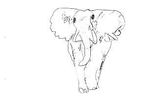 elephant_australia